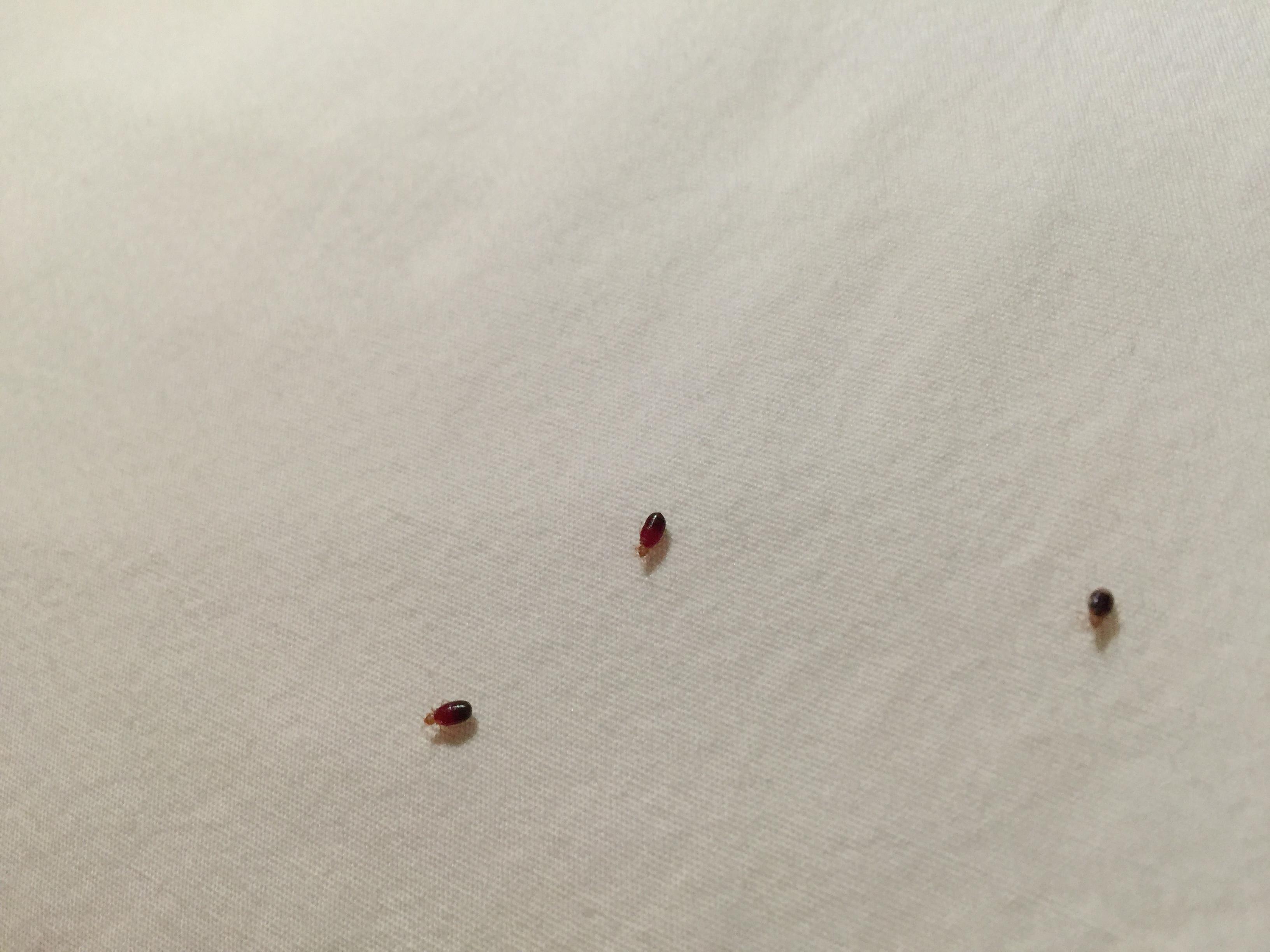 Rancho Cordova Ca Bed Bug Hotel And Apartment Reports
