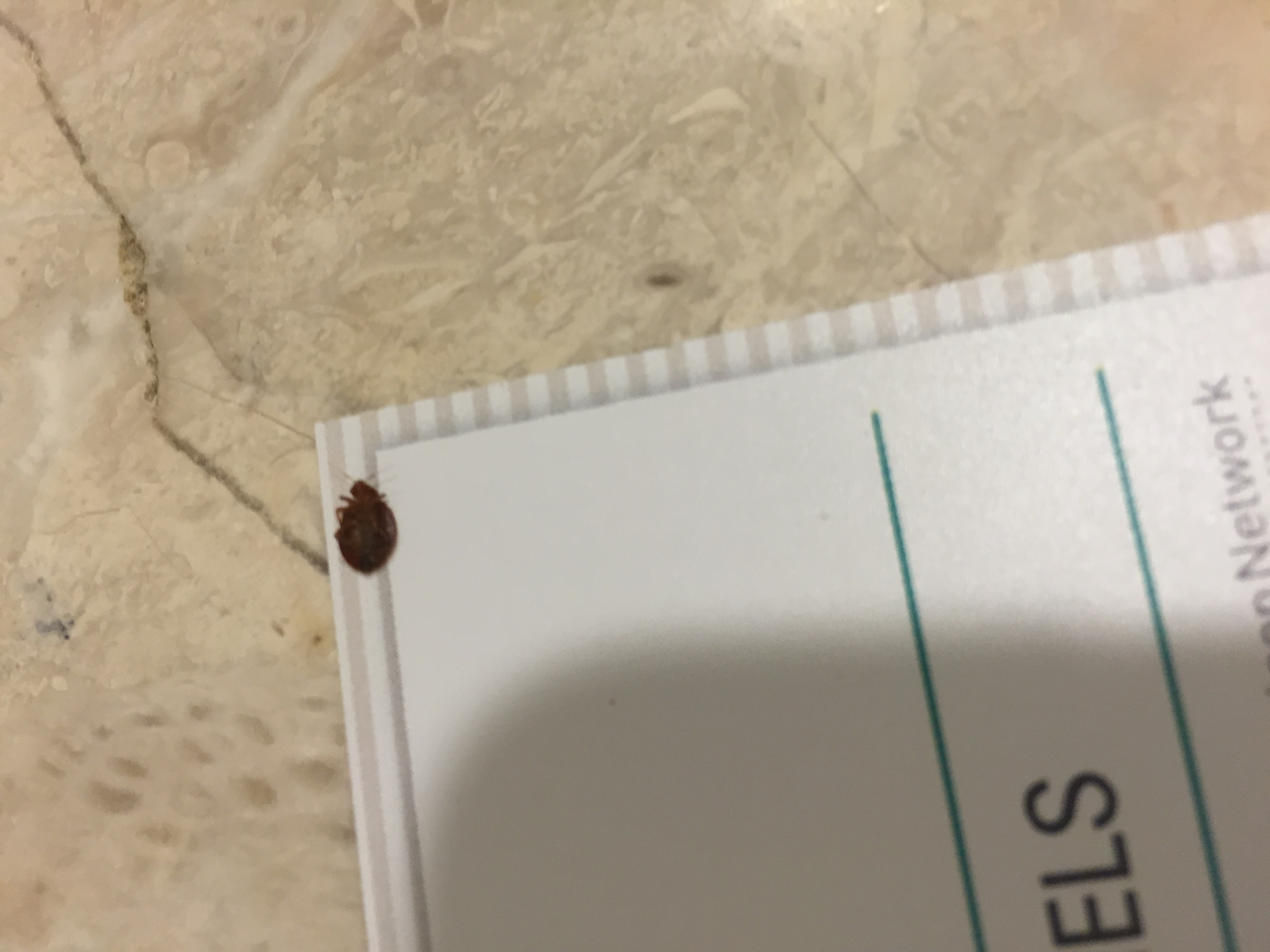 Embassy Suites Indianapolis North Bed Bugs
