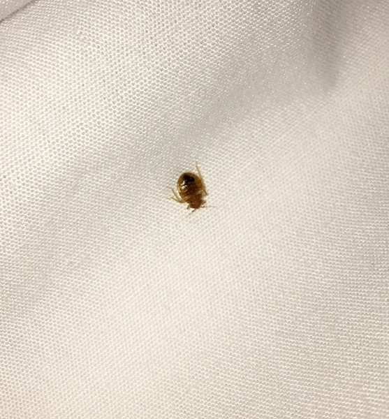 Bed Bugs In Miami Beach Hotels