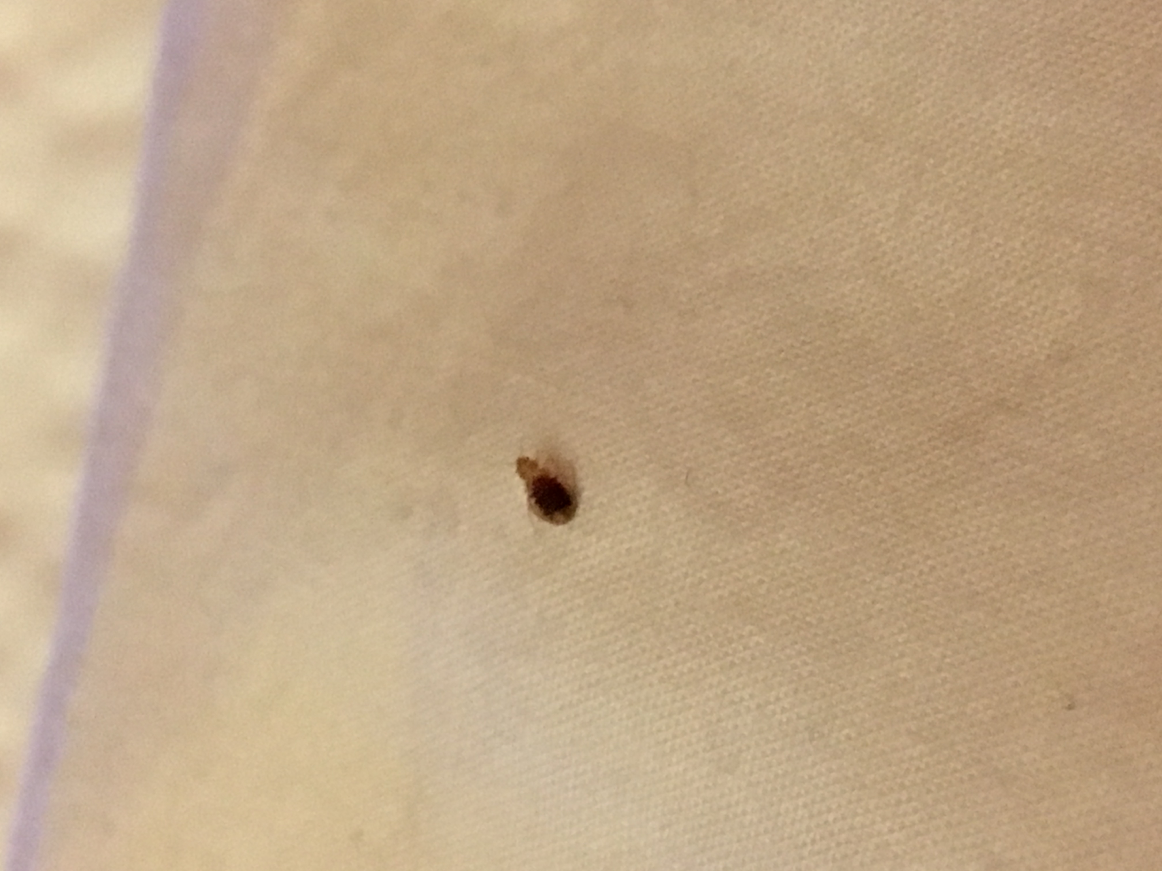 Bed Bug Reports 28 Images Bed Bug Inspection Report