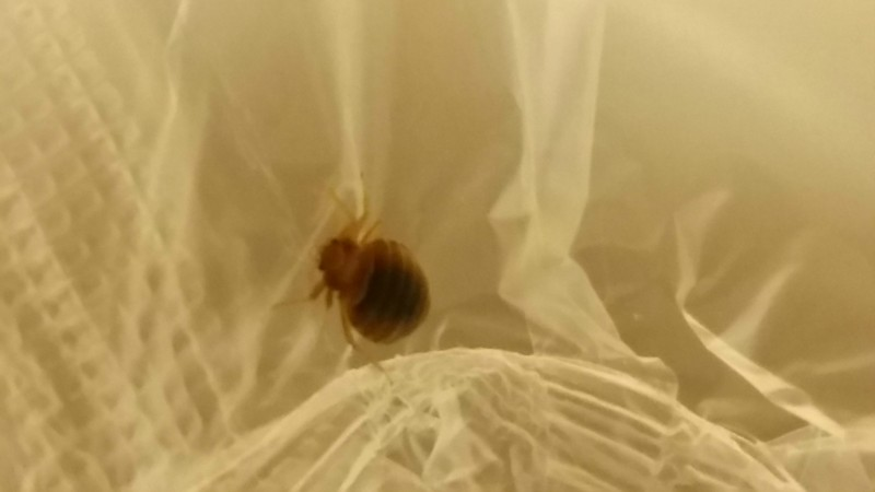 Red roof inn greensboro coliseum bed bug reports for Are bed bugs red