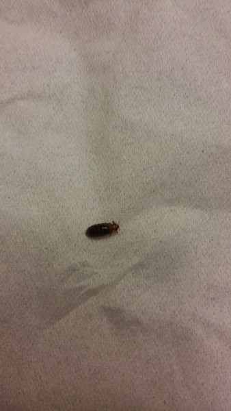 las vegas nv bed bug hotel and apartment reports