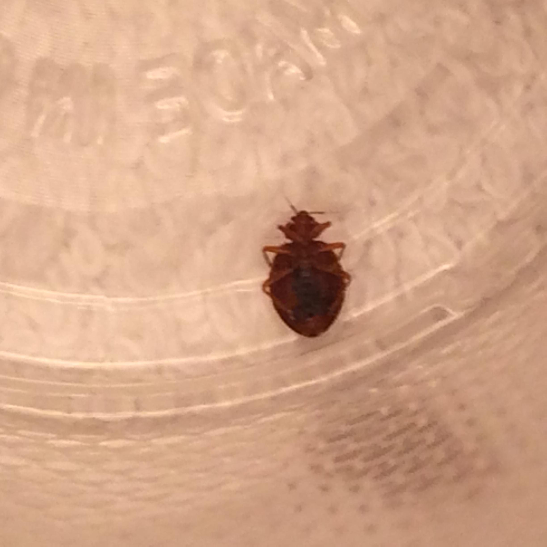 Bed Bug Hotel Registry Chicago