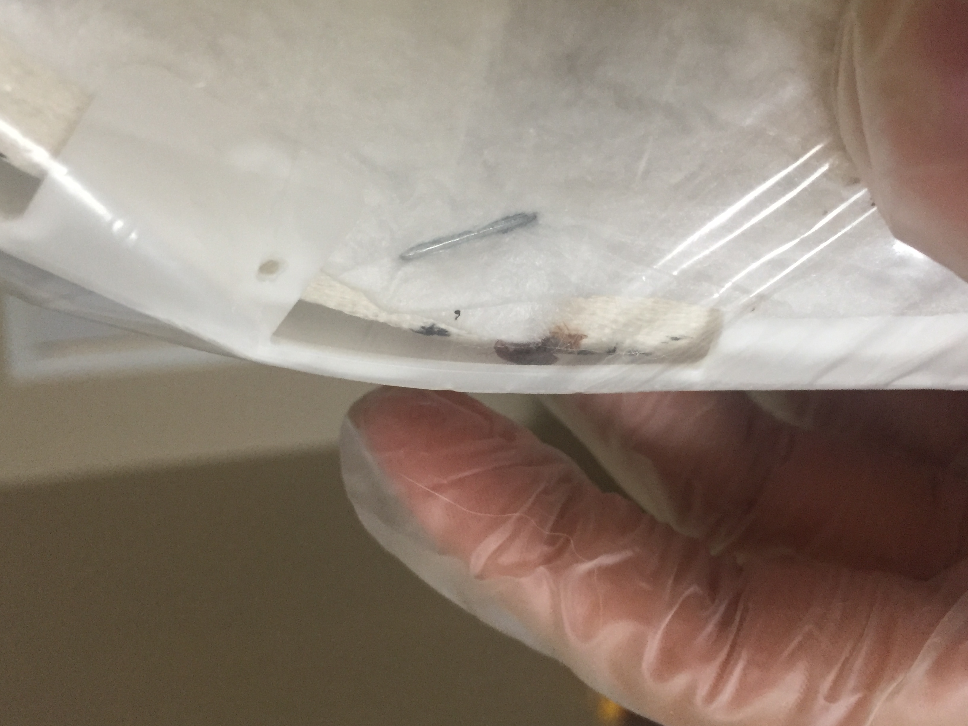 overland park ks bed bug hotel and apartment reports
