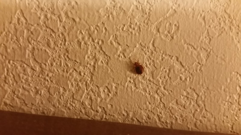 Hotel Bed Bug Registry Indiana