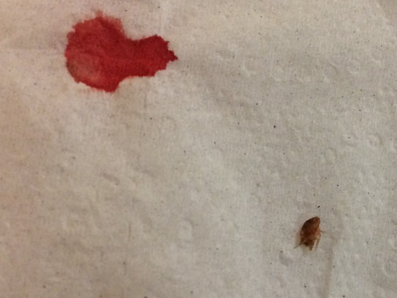 Bed Bugs Columbia Sc