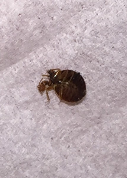 how to find bed bugs in hotel