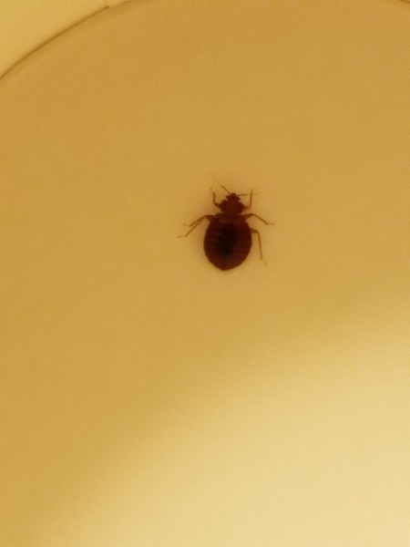 Bed Bug Exterminator Erie Pa