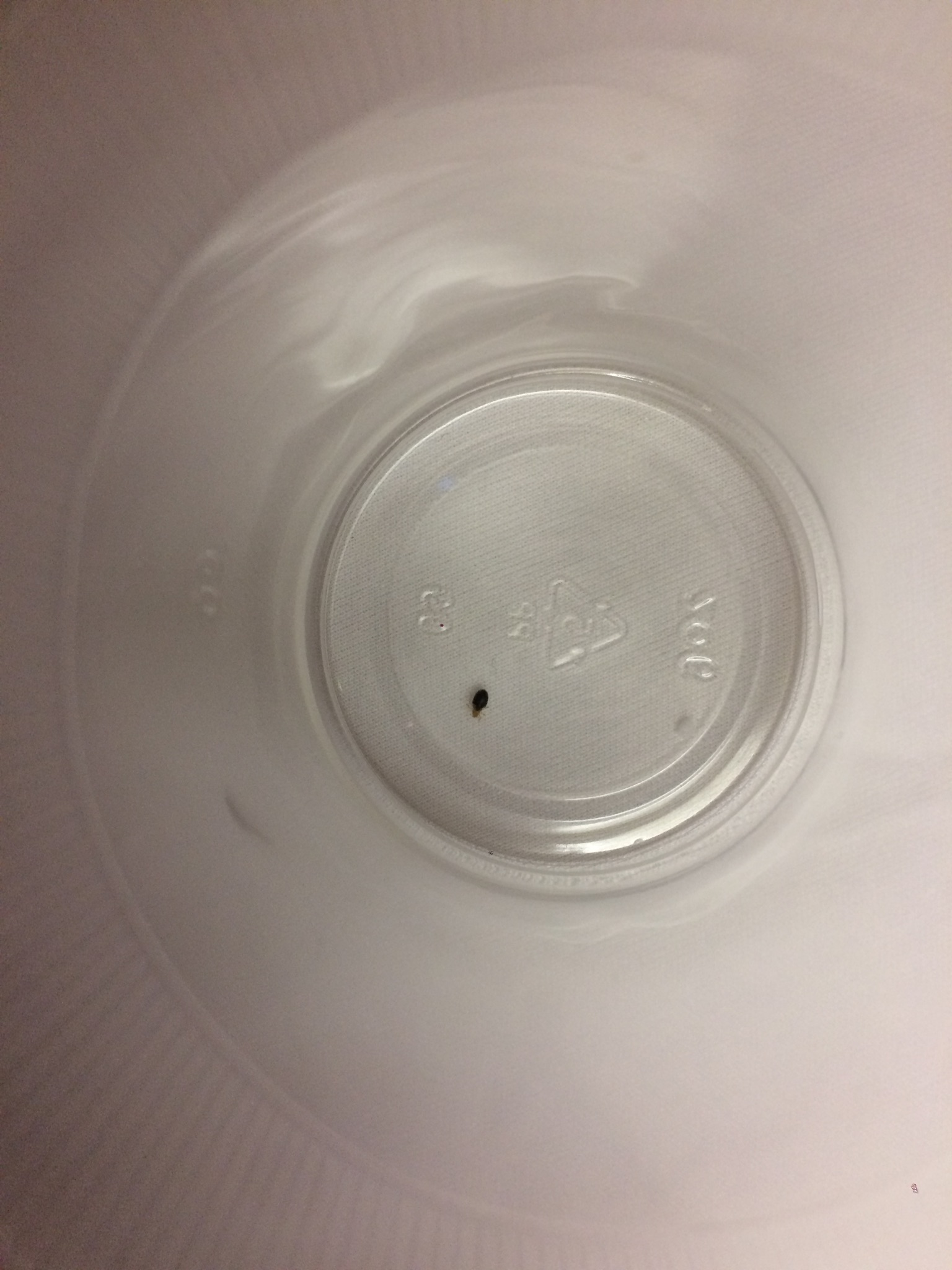 Microtel Inn Springfield Bed Bugs