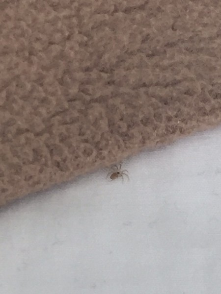 Found Bed Bugs In My Apartment San Francisco