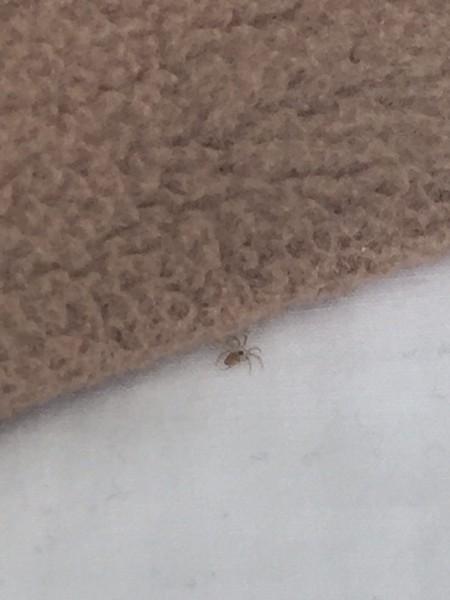 Cartwright Hotel San Francisco Bed Bugs