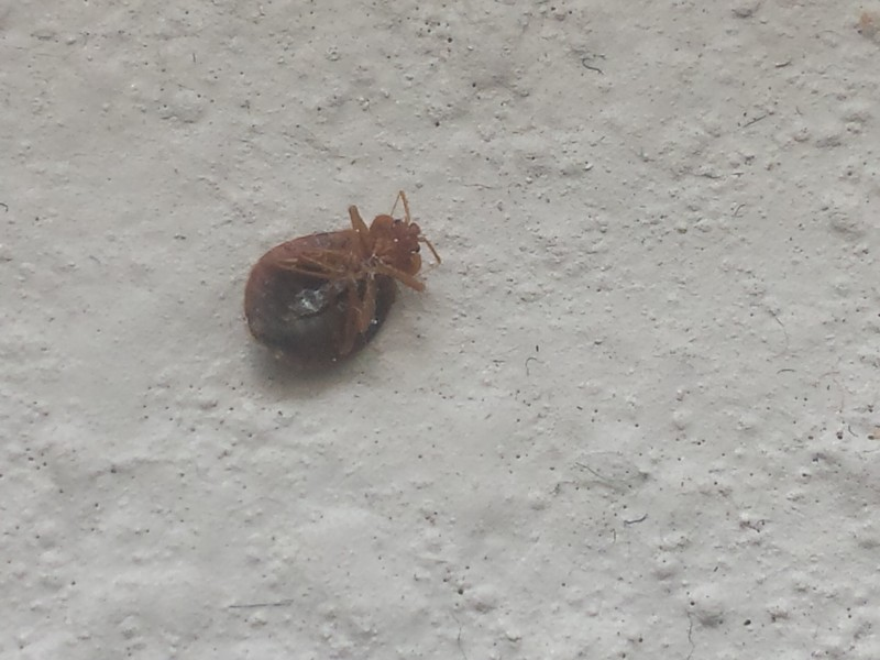 Americas Best Value Inn West Columbia Columbia Tn Bed Bug Hotel And Apartment Reports