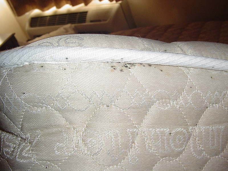 Ohio Bed Bug Hotel And Apartment Reports Bedbugreports Com