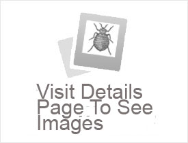Oak Creek Wi Bed Bug Hotel And Apartment Reports