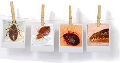 Bed Bug Reports Check Hotels And Apartments Before You Stay